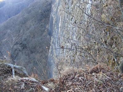 2010_vol5_141