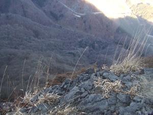 2010_vol5_157