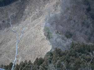 Futagoyama_20110126_294