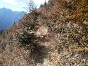 Futagoyama_20110126_333