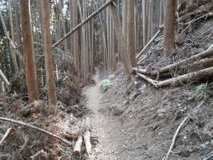 Kawanoriyama_20110128_351