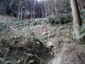Takamizusanzan_20110202_096