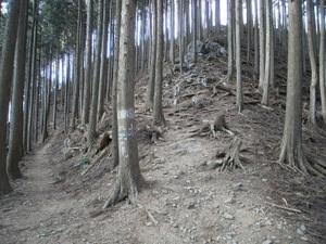 Takamizusanzan_20110202_188