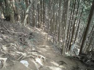 Takamizusanzan_20110202_322