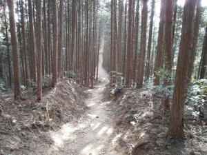Takamizusanzan_20110202_348