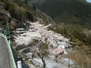 Okutama_mukashimichi_20110416_136