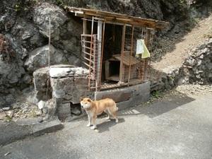 Okutama_mukashimichi_20110416_139