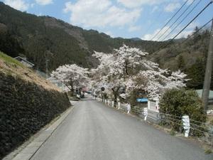 Okutama_mukashimichi_20110416_158