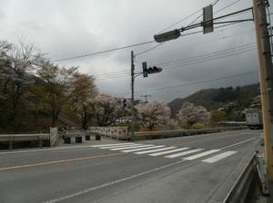 Maruyama_20110418_249