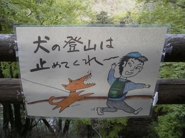 Kobushigatake_20110519_020
