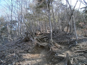 Kobushigatake_20110519_112