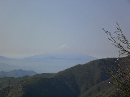 Kobushigatake_20110519_120