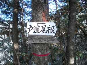 Kobushigatake_20110519_137
