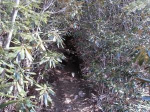 Kobushigatake_20110519_145