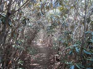Kobushigatake_20110519_151