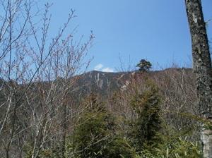 Kobushigatake_20110519_380_2