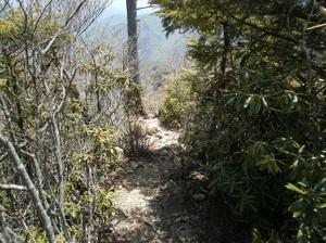 Kobushigatake_20110519_389_2