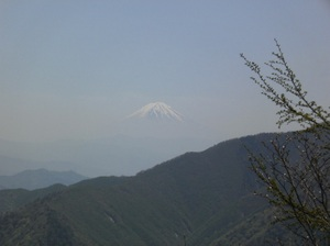 Kobushigatake_20110519_390_2