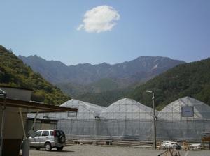 Kobushigatake_20110519_419_2