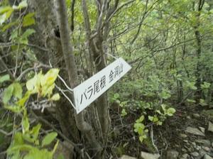 Myougisan_20110531_384
