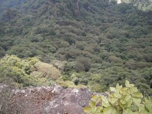 Myougisan_takagaeshi_20110629_366