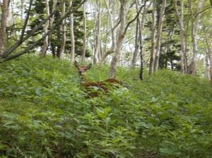 Nikkoshiranesan_20110709_409