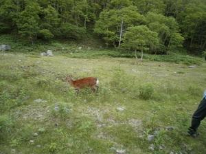 Nikkoshiranesan_20110709_422