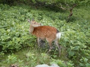 Nikkoshiranesan_20110709_431