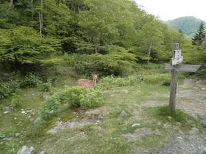 Nikkoshiranesan_20110709_459