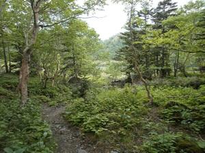 Nikkoshiranesan_20110709_469