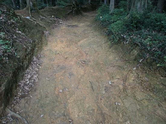 Hiwadayama_pim_20110806_087
