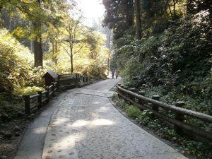 Takaosan_20110910_294