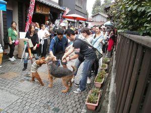 Koedo_kawagoe_20110923_052