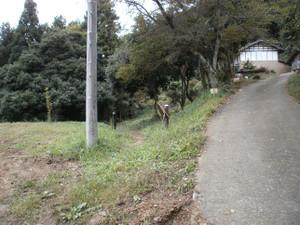 Hapusan_20111002_031