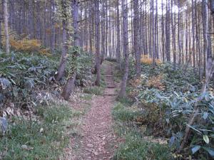 Tairappyouyama_20111021_105