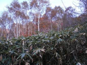 Tairappyouyama_20111021_124