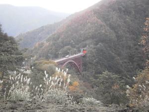 Karisakarei_20111029_033