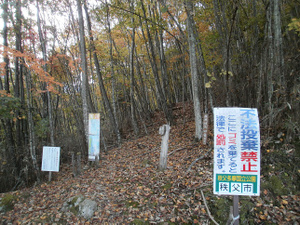 Karisakarei_20111029_102