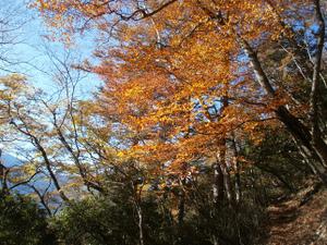 Karisakarei_20111029_167
