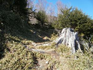 Karisakarei_20111029_290