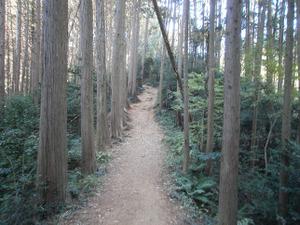 Sukariyama_20111123_073