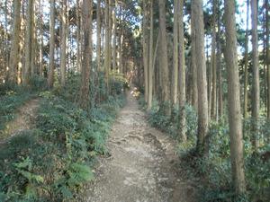 Sukariyama_20111123_088