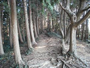 Sukariyama_20111123_095
