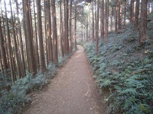 Sukariyama_20111123_108