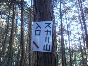 Sukariyama_20111123_129