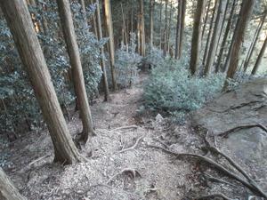 Sukariyama_20111123_175