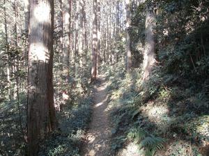Sukariyama_20111123_180