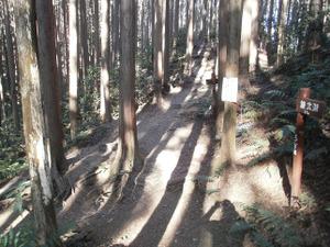 Sukariyama_20111123_183