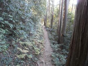Sukariyama_20111123_188