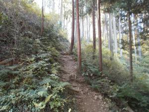 Sukariyama_20111123_194